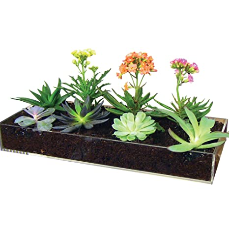 Window Garden Multi Use Acrylic Planter Tray + Fiber Soil + Sprayer U003d  Gorgeous Succulent
