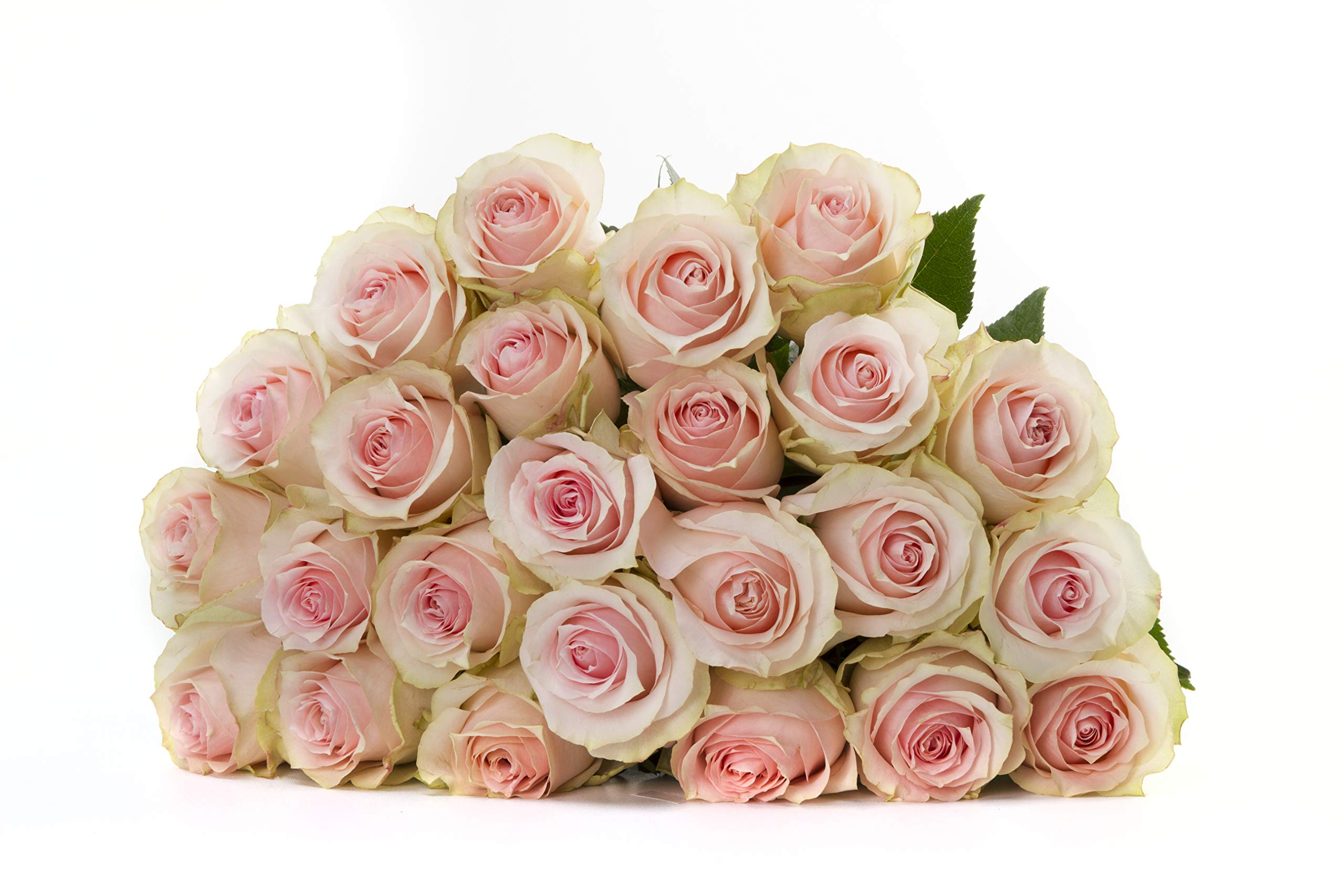 Martha Stewart Roses by BloomsyBox - Two Dozen Soft Pink Geraldine Roses Selected by Martha and Hand-Tied, Long Vase Life