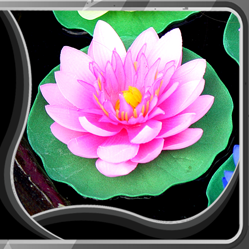 Lotus Live Wallpapers