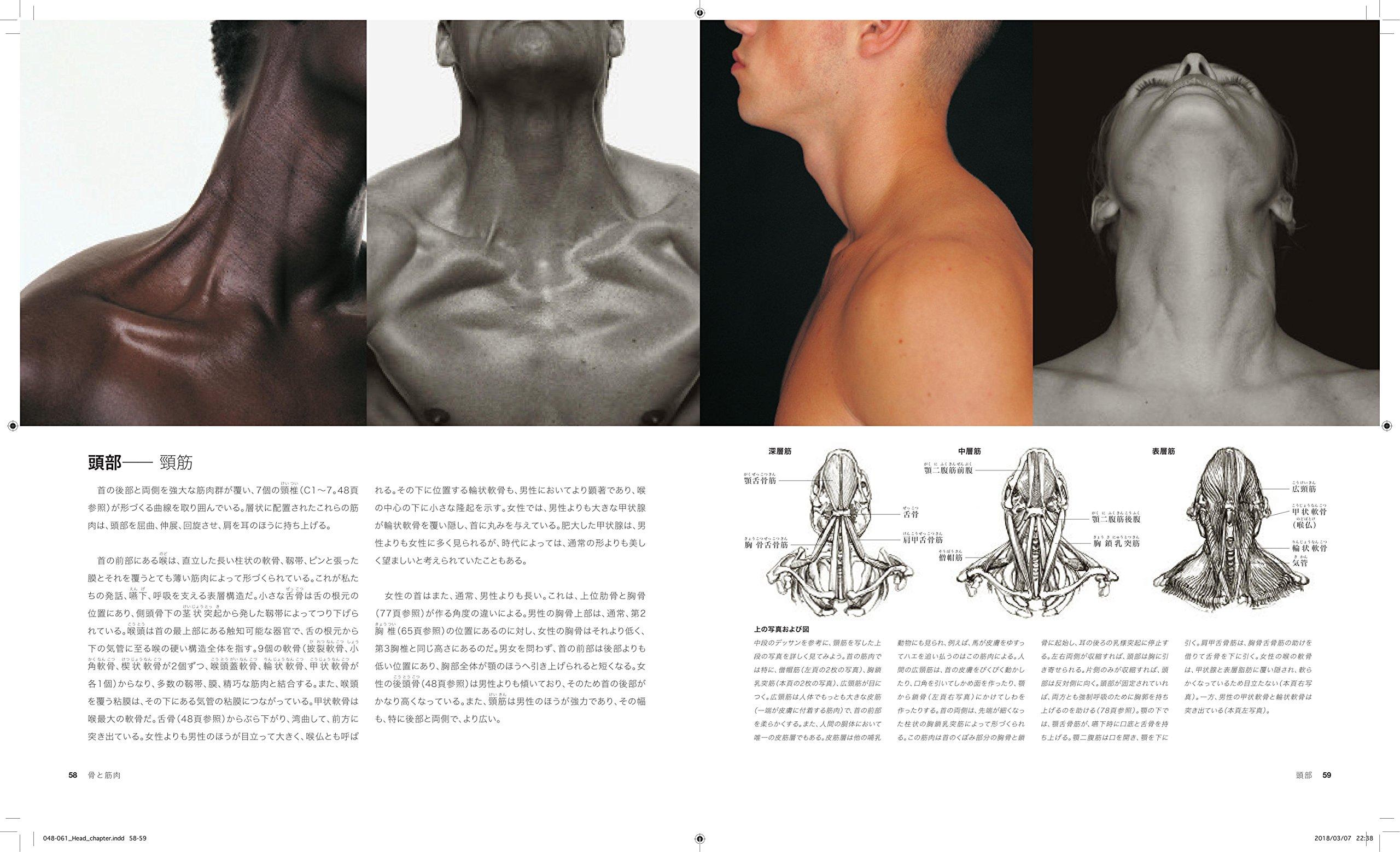 芸術家のための人体解剖図鑑 | ...