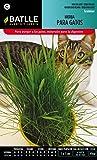 Semillas Batlle 098101BOLS - Hierba para gatos
