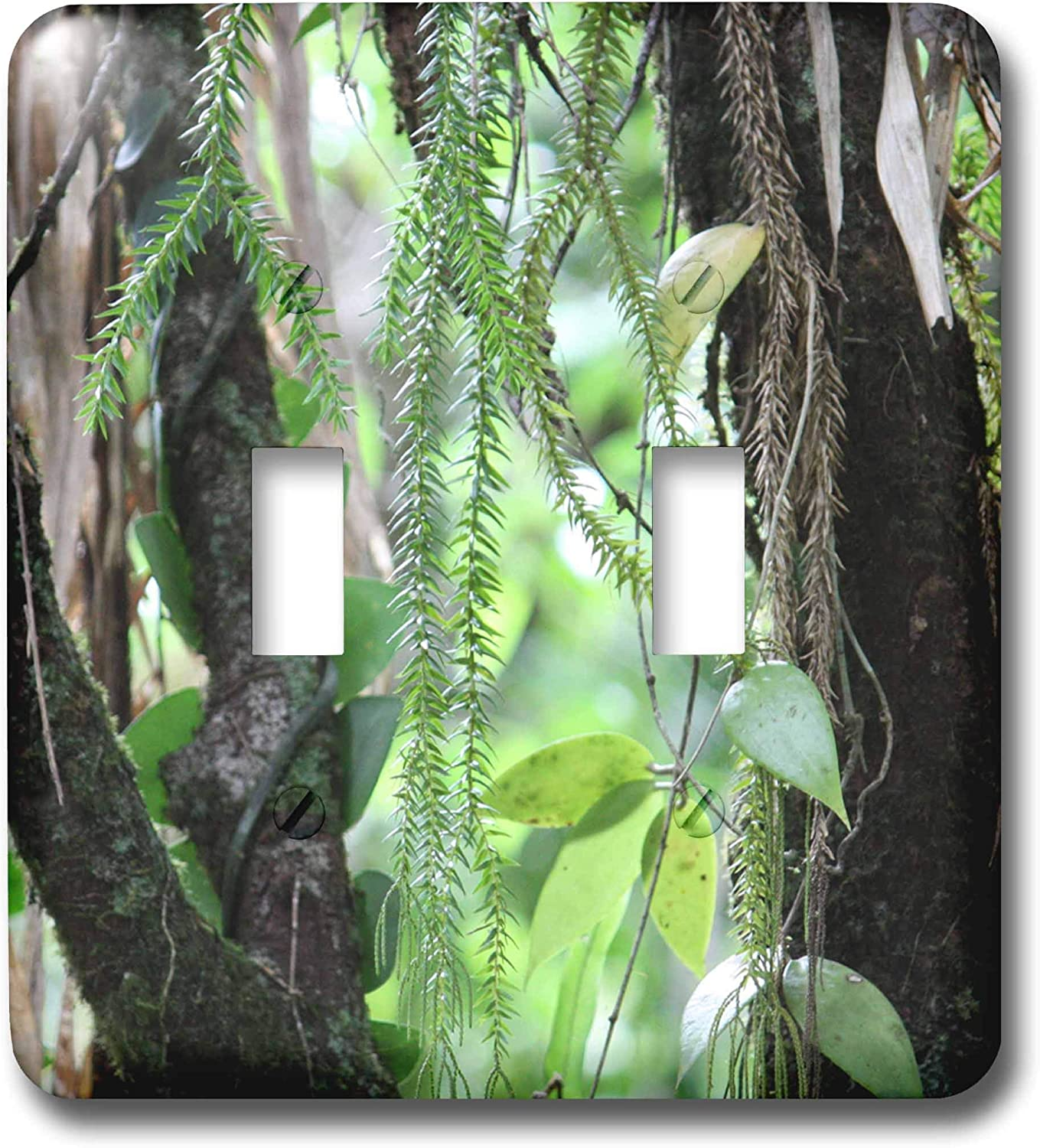 3drose Lsp 22805 2 Inside A Rainforest Tropical Queensland Australia Double Toggle Switch Switch Plates Amazon Com