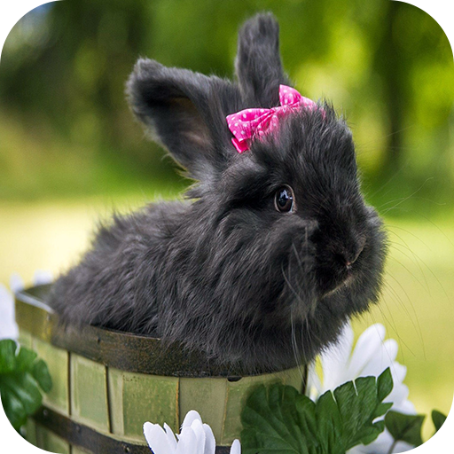 Amazon Com Rabbit Wallpaper Appstore For Android
