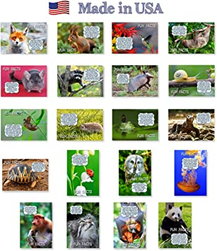 Made in USA. Post card variety pack with trivia and fun fact theme postcards FUN FACTS postcard set of 20