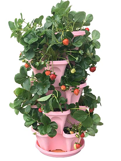 Amazon Com 5 Tier Strawberry And Herb Garden Planter Stackable