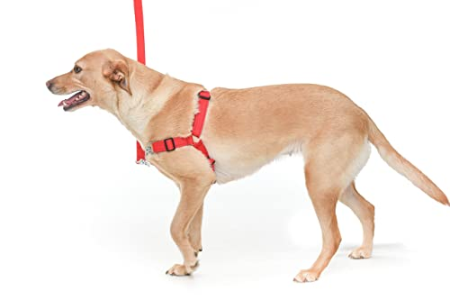 Chaos NON PULL DOG HARNESS - ADJUSTABLE DOG HARNESS (Medium/Large, Red)
