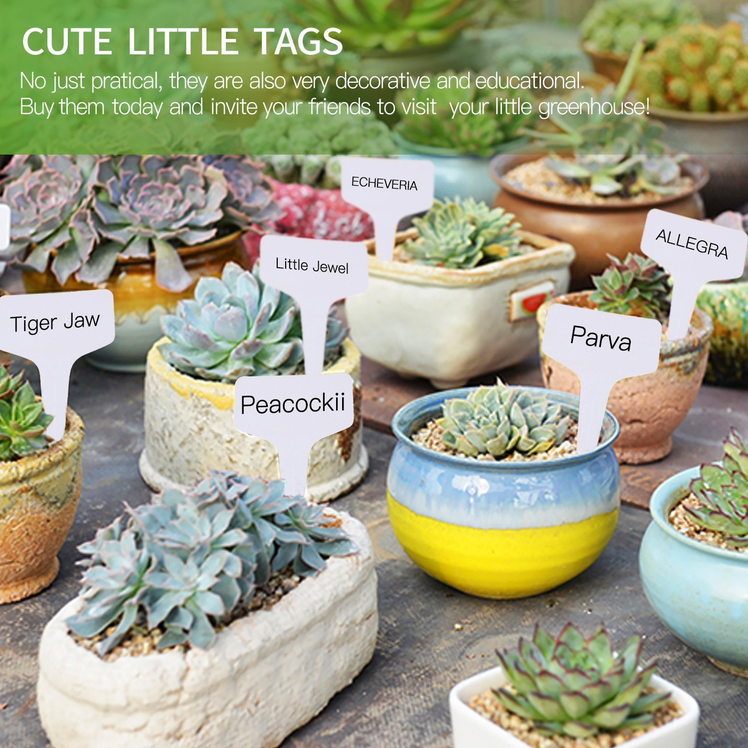 200pcs T-type PVC Waterproof T Tag Plant Markers - Premium Nursery Garden Labels - Eco Friendly - Greyish White (6 x 10cm) by Kalolary
