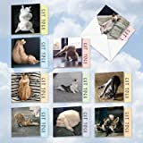 MQ4952OCB-B1x10 Cat Yoga: 10 Assorted Blank Note Cards Featuring Amusing Images of Felines Stretching and Relaxing, with Envelopes.