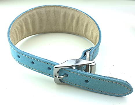 BBD Pet Products Collar para Galgo, Forrado y Acolchado: Amazon.es ...