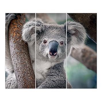 Dekoglas Glasbild Koala Acrylglas Bild Kuche Wandbild Flur Bilder