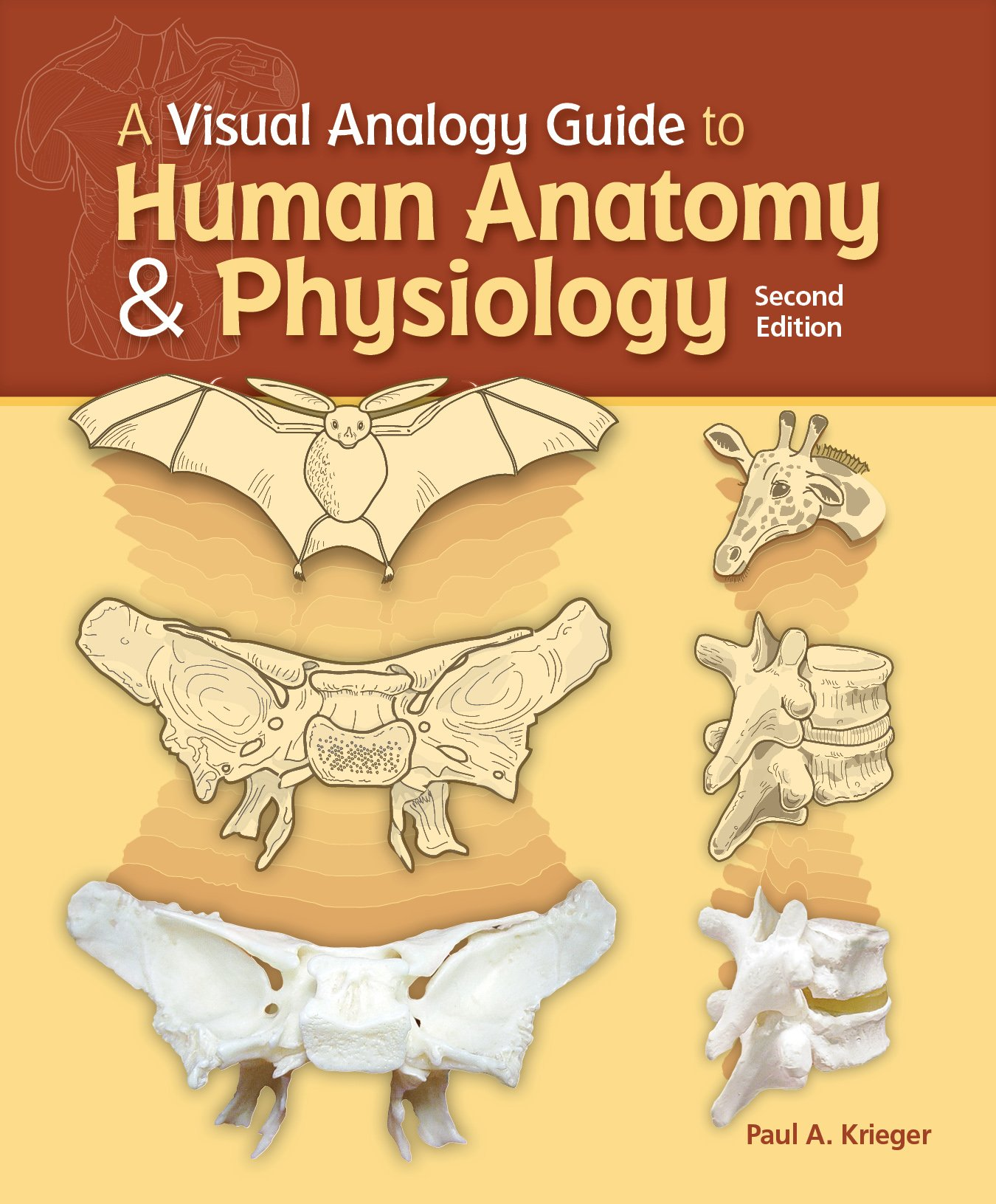 A Visual Analogy Guide To Human Anatomy Physiology Paul A