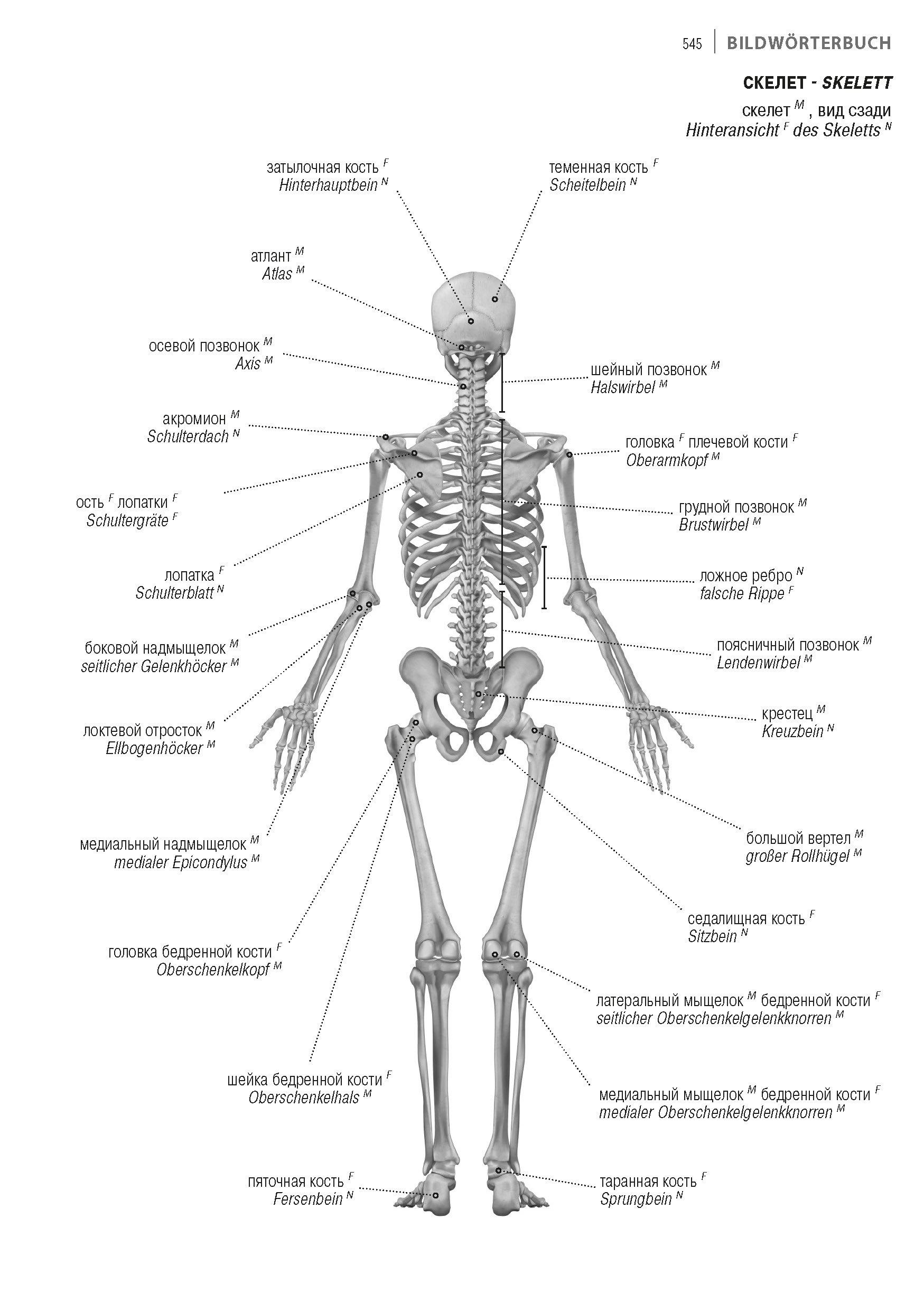 Großzügig Labor Praktische 1 Anatomie Und Physiologie 1 Fotos ...