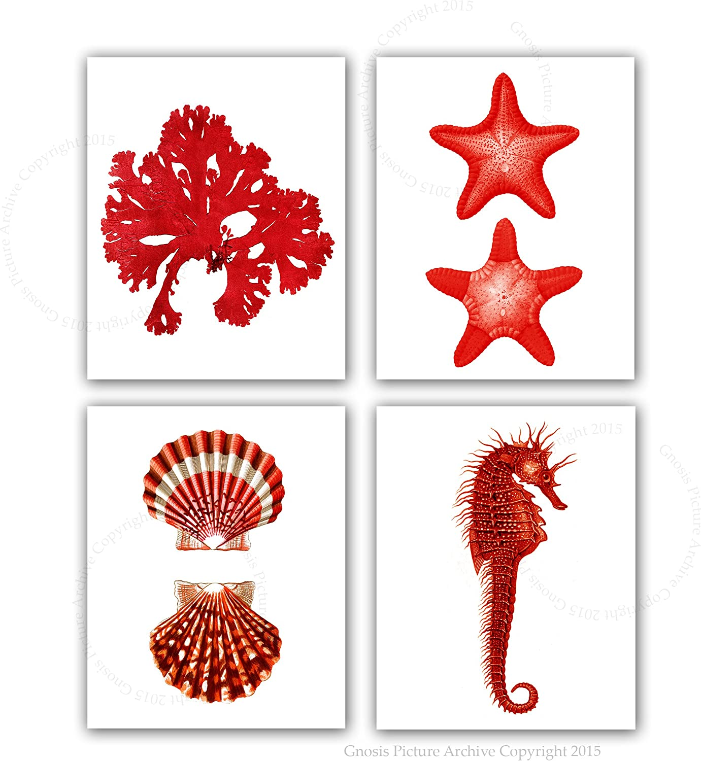 Red Wall Decor Beach Themed Set of 4 Unframed Art Prints Seashells Seahorse Seaweed Starfish Prints