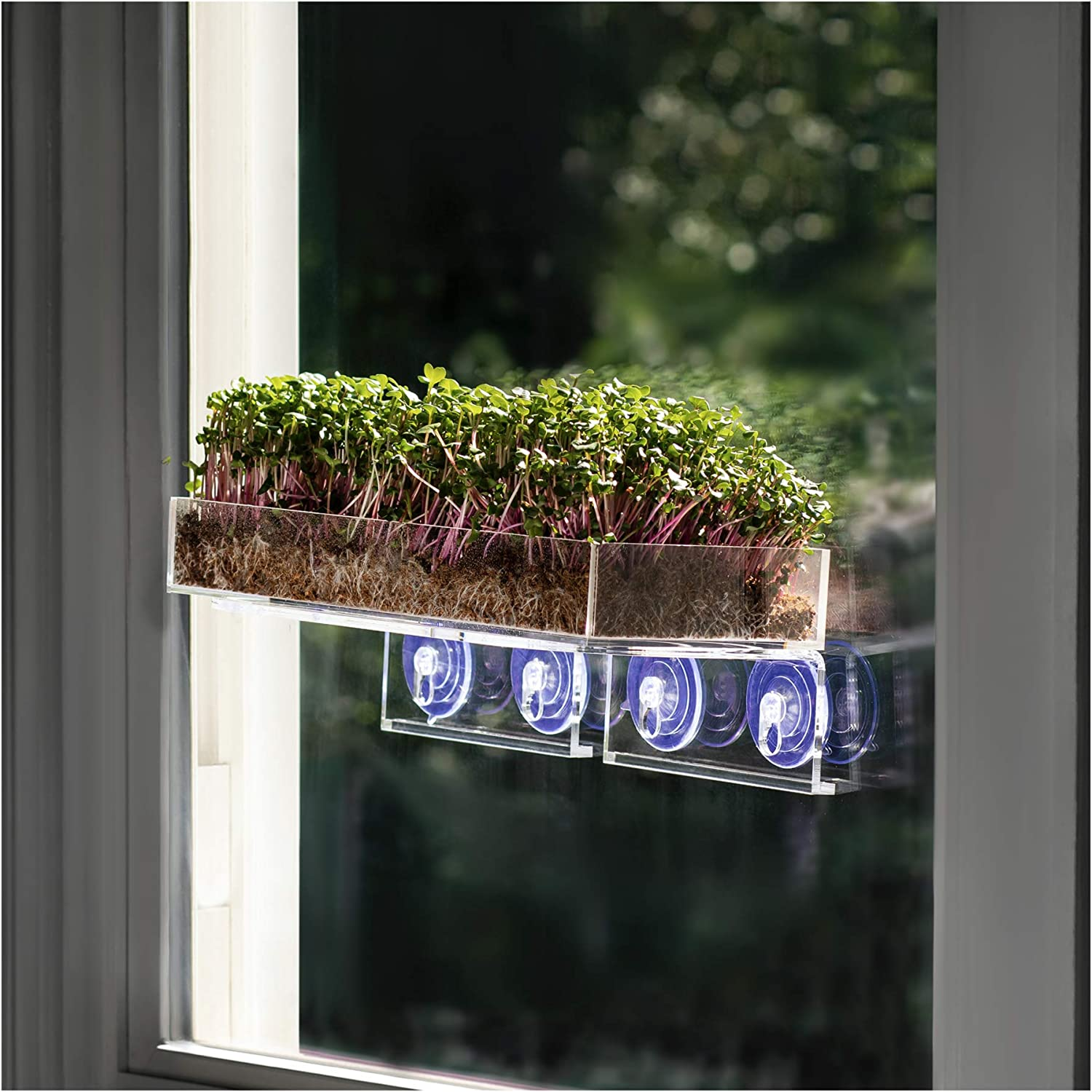 Window Garden Veg Ledge Shelf Microgreens Growing Kit Bundle (5 Crops) – Pre-Measured Soil and Seed. Complete Easy Planting and Growing Indoor Superfood Garden. No Lights, Out of the Way. Looks Great.