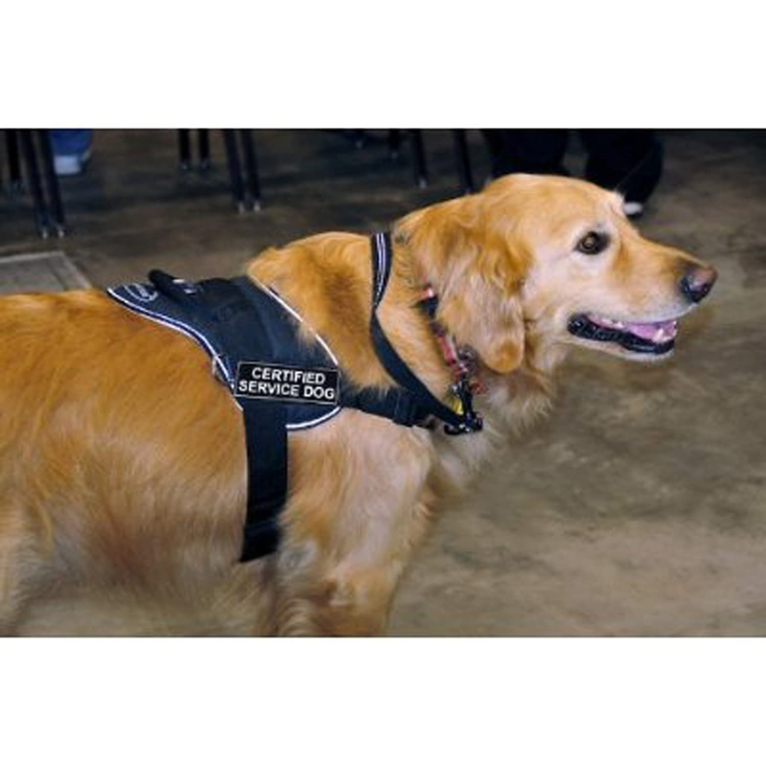 Dean & Tyler Fun Works Harness, Guard Dog, Black with Reflective Trim, Small, Fits Girth Size  22-Inch to 27-Inch