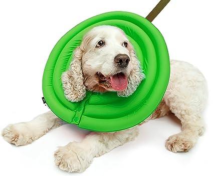 dog collar after surgery