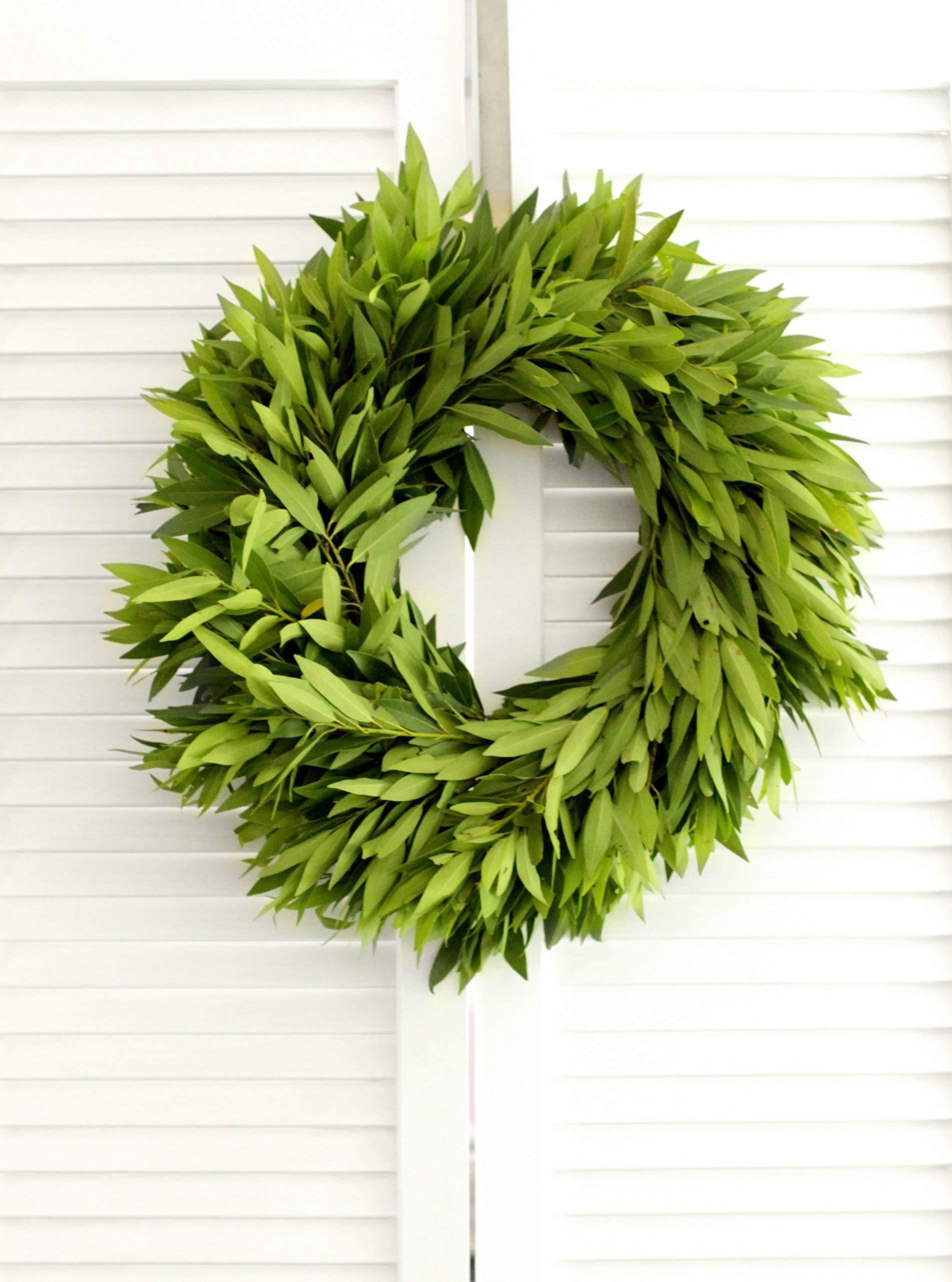 Fresh Bay Leaf Wreath - 20'' (free shipping)