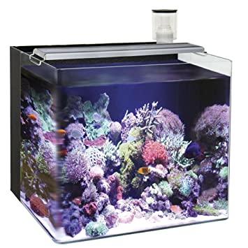 Ocean Free AT640A Nano Acuario Marino, Negro: Amazon.es: Productos ...