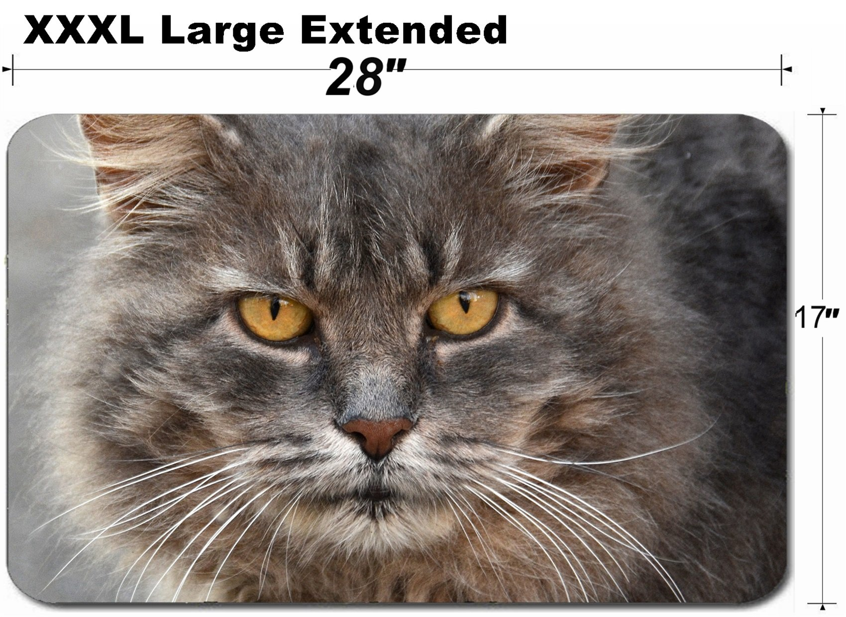 MSD Large Table Mat Non-Slip Natural Rubber Desk Pads Image ID: 37637892 Close up Portrait of a Grey cat