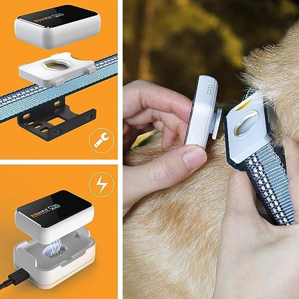 GPS-Trackern-für-Hunde