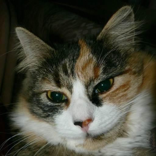 Cat's Meow Sounds