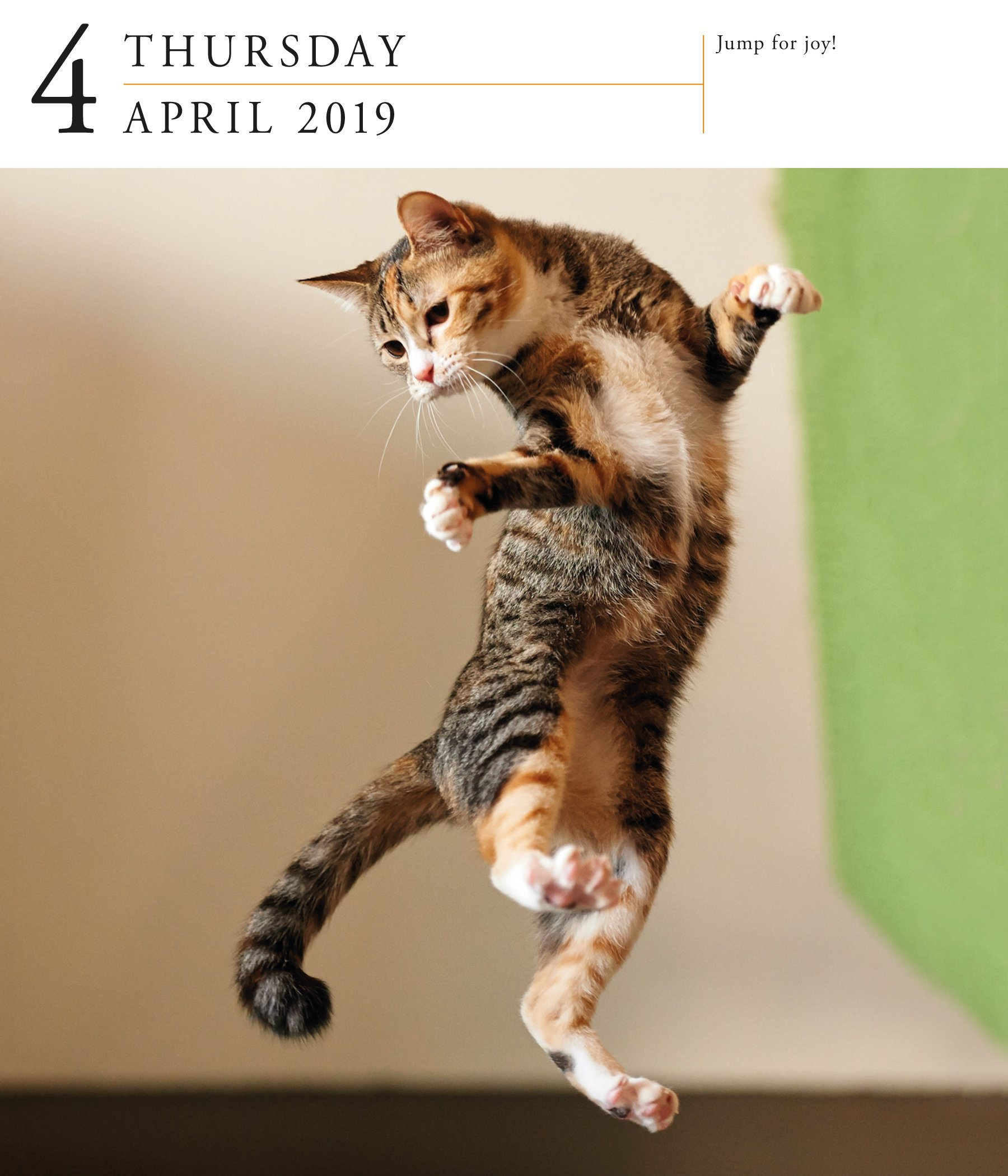 Cat Page-A-Day Gallery Desk Calendar 2019 [6.25'' x 7.25'' Inches] by 2019 Calendars (Image #3)