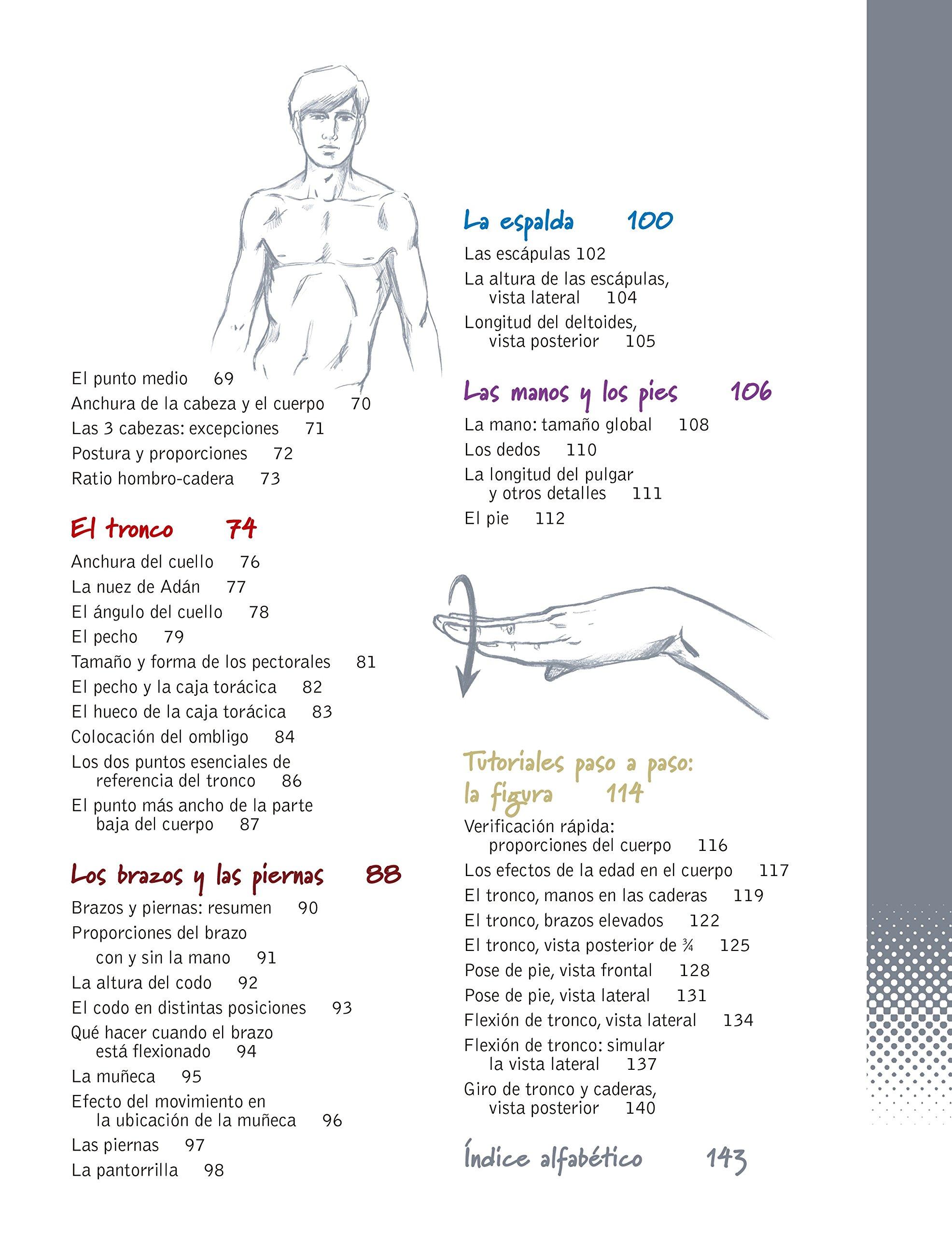 Amazon.fr - ¡Figúrate! Las proporciones del cuerpo humano: Cómo ...