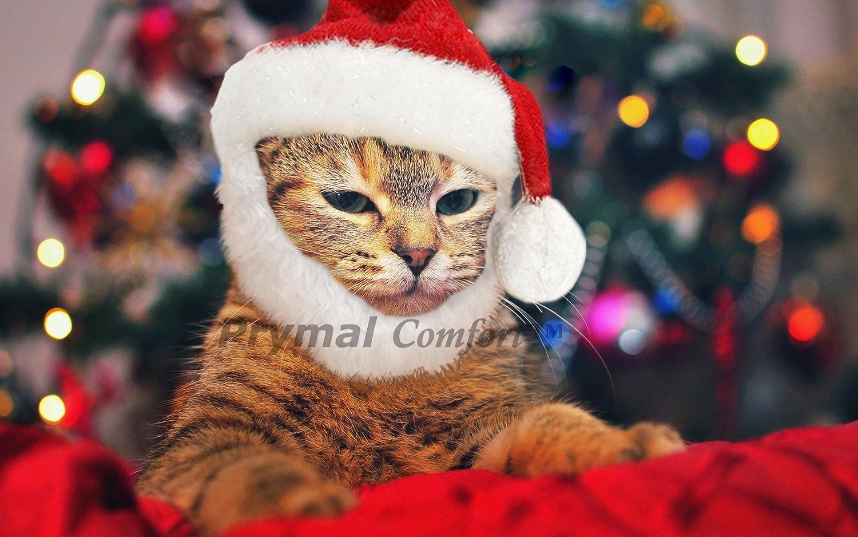 A cat wearing a Santa costume