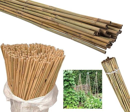 AQS INTERNATIONAL - 50 cañas de bambú Natural de Alta Resistencia ...