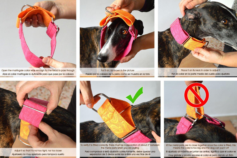 Collar Martingala Para Perro: Kiwi, Hecho a Mano en España por Wakakán