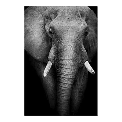 Wild African Elephant Cropped in Black & White on Dark Background 9003580 (Premium 1000 Piece Jigsaw Puzzle for Adults, 20x30, Made in USA!): Toys & Games [5Bkhe0206113]