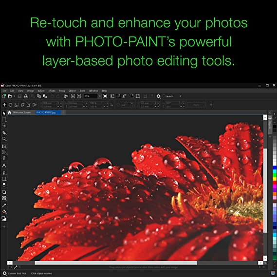 Amazon Com Coreldraw Graphics Suite 2019 With Particleshop Brush Pack For Windows Amazon Exclusive Pc Disc Old Version