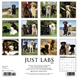 Just Labs 2018 Calendar