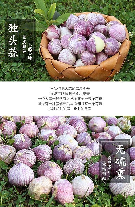 Noreste Daqing piel púrpura solo ajo cabeza ajo picante ajo picante ajo fresco (500g): Amazon.es: Salud y cuidado personal