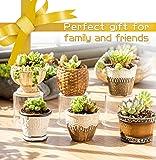 Iwailoft Small Succulent Planter Pots (6pack) (Set of 6)