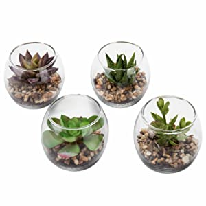 Set of 4 Decorative Mini Modern Design Clear Round Artificial Succulent Plant Glass Display Vases (Assortment 1)