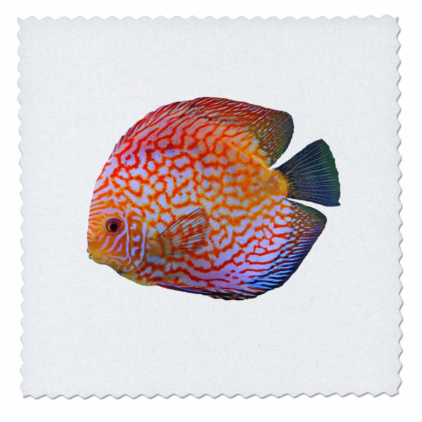 3dRose Sven Herkenrath Animals - King Of The Aquarium Discus Fish Image Wildlife - 22x22 inch quilt square (qs_262415_9)