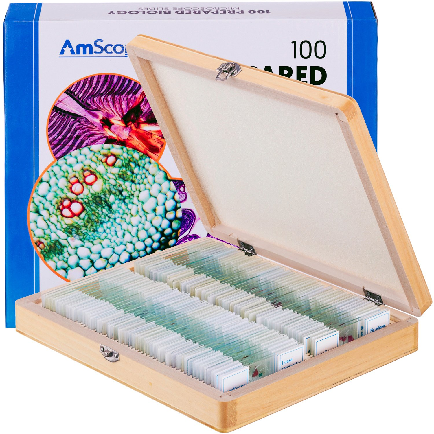 AmScope PS100E Basic Biology Prepared Slide Set for Student and Homeschool Use, Set of 100 Prepared Glass Slides (Set E), Includes Fitted Wooden Storage Box United Scope LLC.