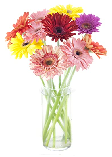 Amazon Assorted Gerbera Daisy Bouquet 10 Stems With Vase