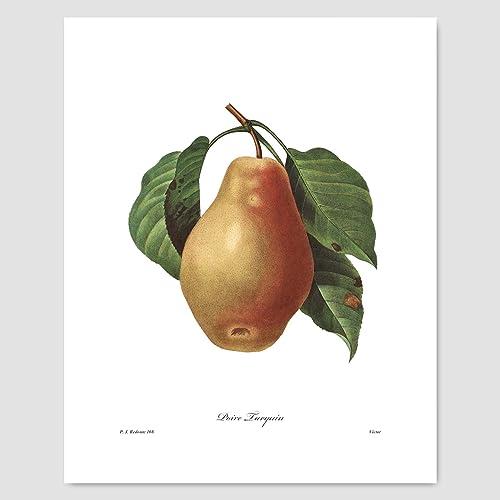 Amazon.com: Fruit Art, Pear Print (Farmhouse Chic Home, Botanical ...