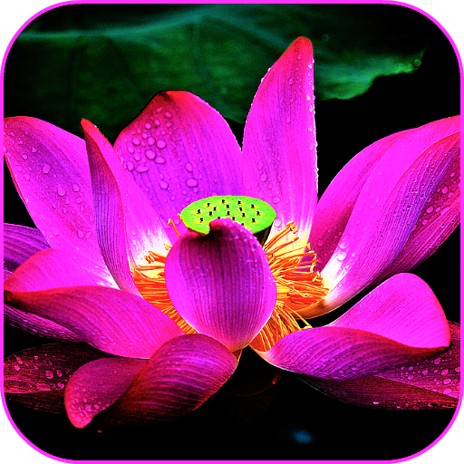 Amazon.com: Lotus Flower Wallpaper: Appstore For Android