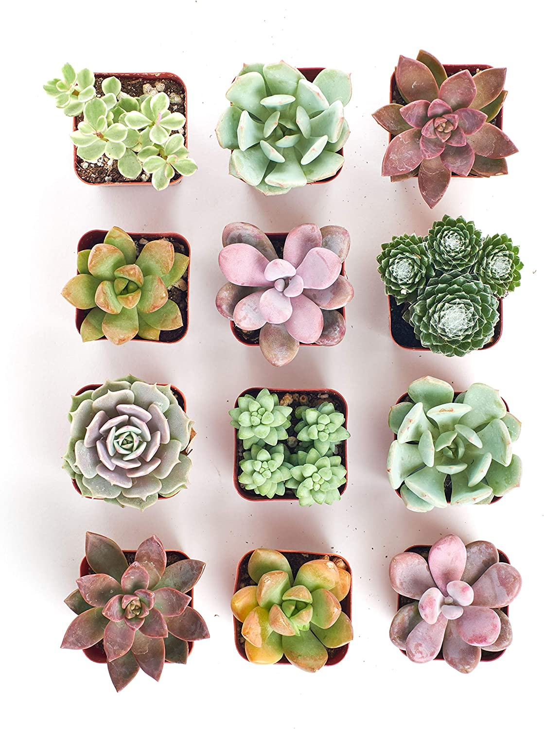 set of 12 succulents cute succulent mini planters to start regrowing from cutting