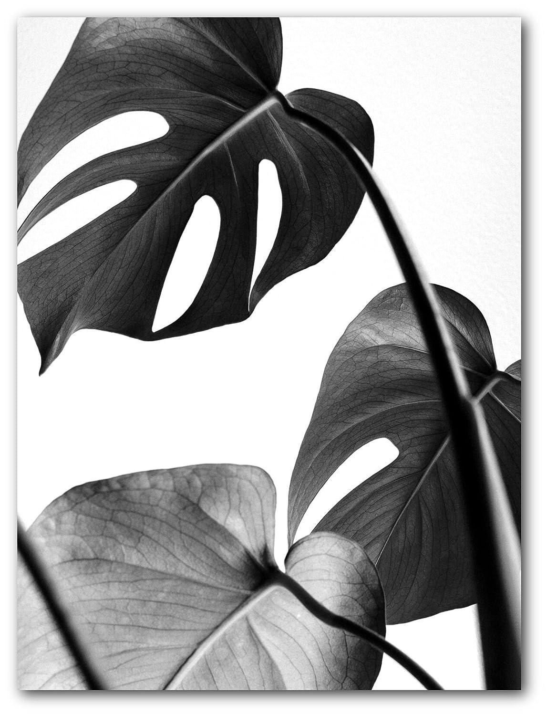 Monstera leaf print black and white leaf 8 x 10 inches wall art unframed