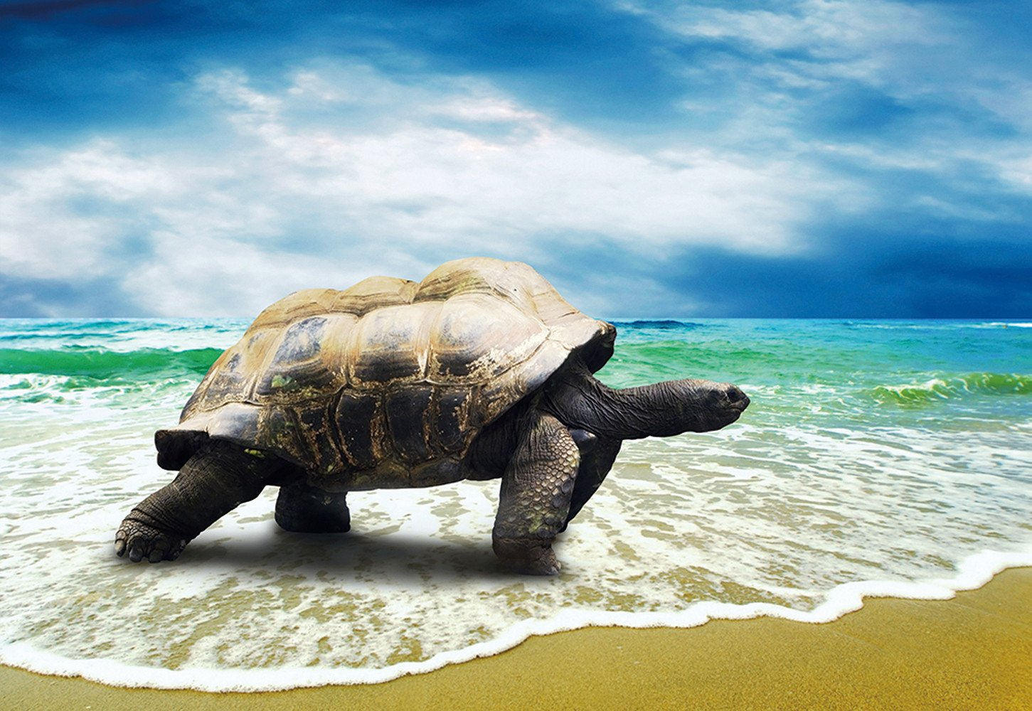 CHOIS Custom Films CF3201 Animal Tortoise Seaturtle Glass Window Privacy Frosted 4' W by 3' H
