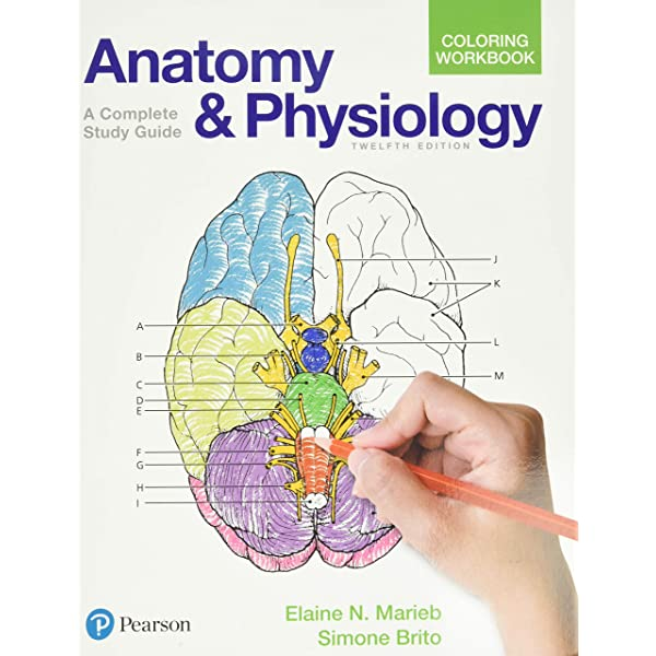 Amazon.com: Anatomy And Physiology Coloring Workbook: A Complete Study  Guide (9780134459363): Marieb, Elaine, Brito, Simone: Books