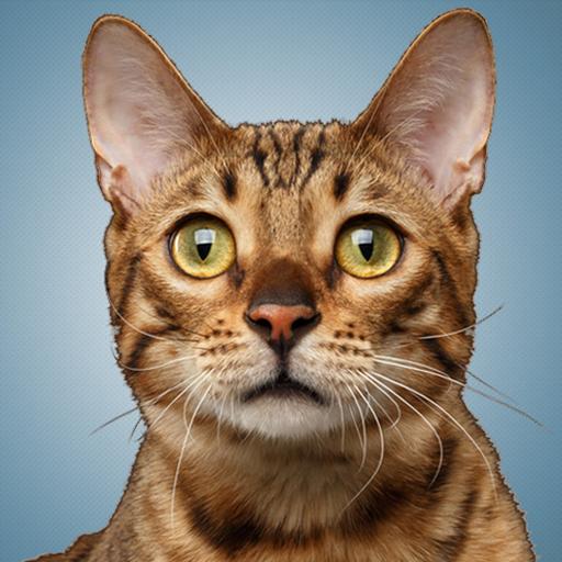 Sonidos De Gatos - Sonidos De Gatitos : Amazon.es: Apps y Juegos