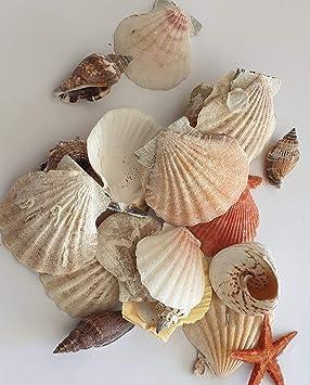 Hibuy 220g Muscheln Gemischt Muschelsortiment Zum Dekorieren Und Basteln Muschel Sortiment Ca 25 Teile Muschelmix