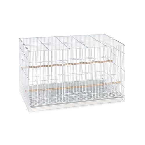 U Haul Finch Finch Cage: Amazon.com