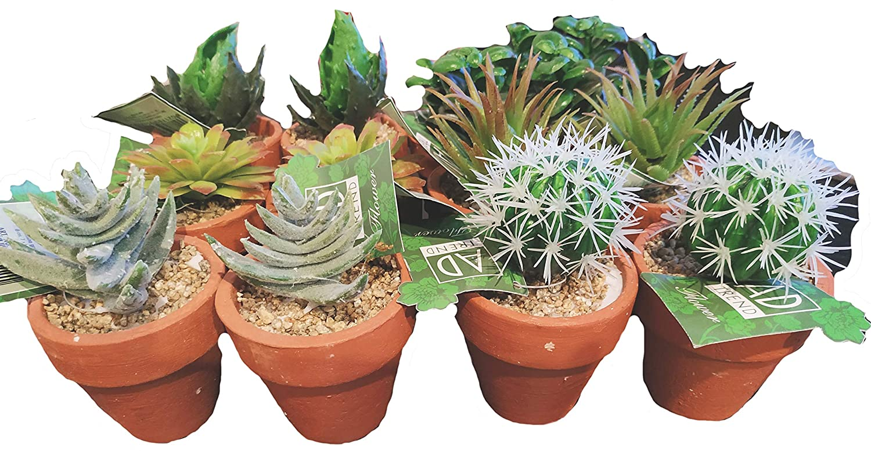 Diametro 7cm x Altezza 11cm Circa AD TREND Set di 12 Vasi con Piantine Grasse Artificiali