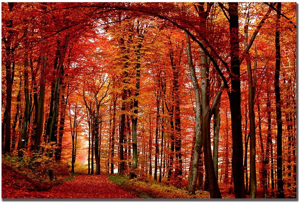 Amazon Com The Red Way By Philippe Sainte Laudy 22x32 Inch Canvas Wall Art Prints Posters Prints